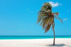 Palmtree in the wind on Aruba island in the Caribbean Sea. Palmtree in the wind on the beach from Aruba island in the Caribbean Sea Stock Images