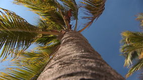 A palmtree in the wind. Low angle shot of a palm tree stock video footage