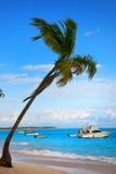 Palmtree y playa exótica en la República Dominicana Fotografía de archivo libre de regalías