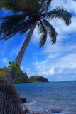 palmtree2 Fotografering för Bildbyråer