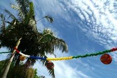 palmtreedeltagare Arkivbild