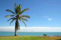 Palmtreeoverzees van Darwin Stock Fotografie