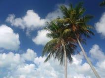 palmtrees二 免版税库存图片