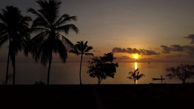 Palmtrees восхода солнца сток-видео