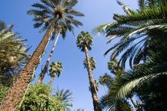 palmtrees Stock Photo