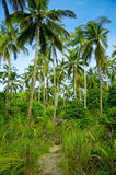 Palmtrees Royalty Free Stock Photo