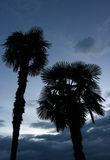 Palmtrees Photographie stock