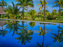 Palmtrees Photo stock