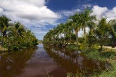 Palmtrees along the river Royalty Free Stock Photo