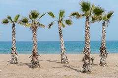 Palmtrees on the beach Royalty Free Stock Photo