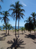 Palmtrees on beach. Palmtrees at the beach in Costa Rica stock image
