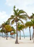 Palmtrees at the beach on Aruba island Royalty Free Stock Photo