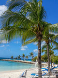 Palmtrees and Beach beds. Royalty Free Stock Image