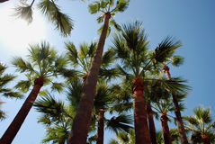 Palmtrees on the beach in Cannes. With a lot of sunshine Royalty Free Stock Images