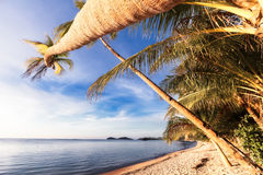Palmtrees on the Beach Royalty Free Stock Image