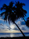 Palmtrees in a beautiful blue sunset. With soft waves at the sea Stock Image