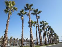 Palmtrees. Beautiful palmtrees Sochi Olypmic Park Royalty Free Stock Photos