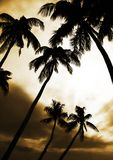 Palmtrees bij hemelachtergrond Stock Foto