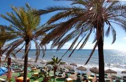 Palmtrees bij Marbella strand Stock Foto