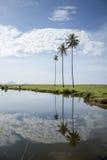 Palmtrees che riflette in un lago calmo Immagini Stock