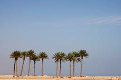 Palmtrees da fileira Fotografia de Stock Royalty Free