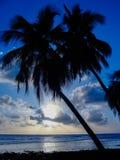 Palmtrees dans un beau coucher du soleil bleu Image stock