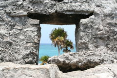 Palmtrees derrière des ruines Tulum Mexique Photographie stock libre de droits