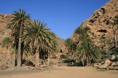 Palmtrees Stock Image