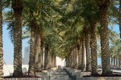 Palmtrees, Doha, Qatar Stock Images