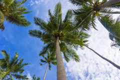 Palmtrees El Nido Philippines Stock Photography
