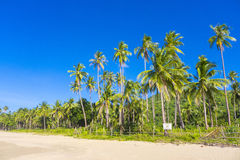 Palmtrees El Nido Philippines. White sand beach and palmtrees on Nacpan Beach, El Nido, Palawan, Philippines Royalty Free Stock Images