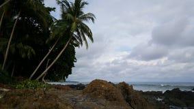 Palmtrees em Montezuma Costa Rica Fotos de Stock Royalty Free