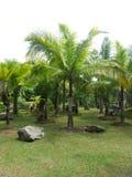 Palmtrees em toda parte fotografia de stock