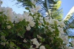 Palmtrees en de bloemen van Californië Stock Foto