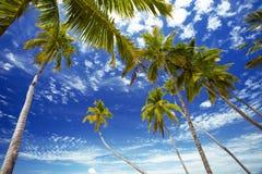 Palmtrees en hemel, de Maldiven stock foto's