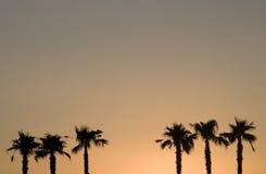Palmtrees en la puesta del sol Foto de archivo libre de regalías