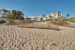 Palmtrees en las dunas de la playa Foto de archivo libre de regalías