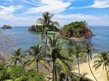 Palmtrees en las playas tropicales de Panamá Fotos de archivo libres de regalías