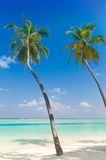 Palmtrees en una playa tropical Imagenes de archivo