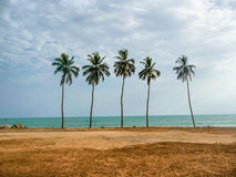5 Palmtrees Royalty Free Stock Images
