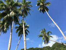Palmtrees in the hills of Anda. Bohol the Philippines Royalty Free Stock Photography