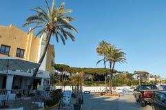 Palmtrees i Cabopino, Marbella Royaltyfri Foto