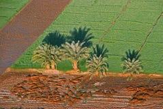 Palmtrees i fält på Luxor som tas från luft-ballongen Royaltyfri Bild