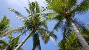 Palmtrees i himlen Royaltyfri Fotografi