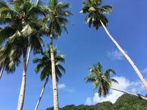 Palmtrees i kullarna av Anda Royaltyfri Fotografi
