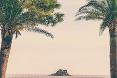 Palmtrees i Petrovac Royaltyfri Bild
