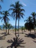 Palmtrees na praia Imagem de Stock
