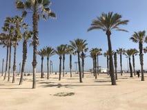 Palmtrees na praia das arenas de Las Imagem de Stock Royalty Free