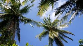 Palmtrees nel cielo Immagini Stock
