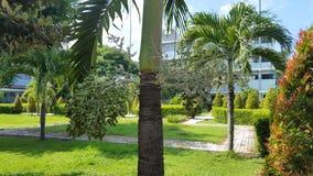 Palmtrees nell'ospedale del parco, con le piante naturali che danno l'impressione di conforto e di calma fotografie stock